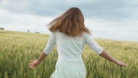 Närbild av kvinnas händer som kör till och med vetefältet, steadicamskott l?ngsam r?relse Flicka som trycker på spikelets Bra sk? stock video