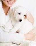 Närbild av labradorvalpen på händerna av kvinnan Royaltyfri Fotografi