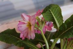 Närbild av naturliga blommor Royaltyfri Fotografi