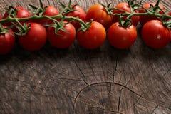 Närbild av nya mogna tomater Arkivfoton