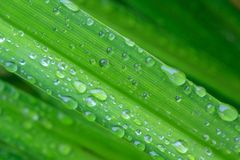 Närbild av nytt grönt gräs med stora droppar av dagg Royaltyfria Bilder