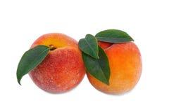 Närbild av söta ljusa persikor, på en vit bakgrund Mogna två, näringsrika härliga frukter En healthful frukost royaltyfria foton