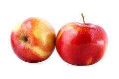 Närbild av söta röd-guling äpplen som isoleras på en vit bakgrund Mogna, näringsrika ljusa frukter En healthful frukost royaltyfri bild
