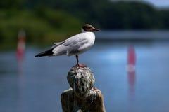 Närbild av seagullen som sätta sig på ett huvud av skulptur fotografering för bildbyråer