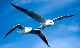 Närbild av seagulls Arkivfoton