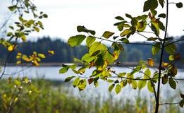 Närbild av sidor på ett träd arkivfoto