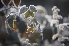 Närbild av sidor som täckas med frostkristaller royaltyfri bild