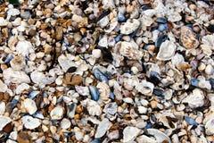 Närbild av snäckskal på kusten Arkivfoton