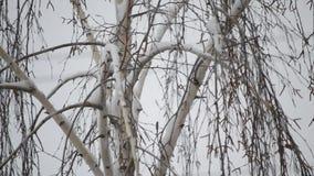 Närbild av snö som faller på bakgrund av avlövat stock video