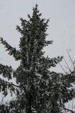 Närbild av snö-täckte träd och filialer på bakgrunden av en häftig snöstorm och häftiga snöstormen med en mjuk bakre vinkel royaltyfri fotografi