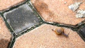 Närbild av snigeln på trottoar Arkivbild