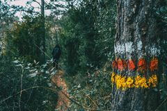 Närbild av stamskället av ett träd med målarfärg fotografering för bildbyråer