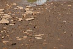 N?rbild av stenar och v?t sand p? utkanten av en p?l royaltyfri foto