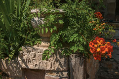 Närbild av stenar och vasen med buskar och blommor på den Les Arcs-sur-Argens Fotografering för Bildbyråer