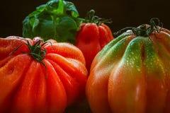 Närbild av stora röda tomater med svart bakgrund Arkivfoto