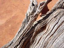 Närbild av torkat - ut trä Arkivfoton
