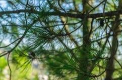 Närbild av trädsidor royaltyfri bild