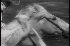 Närbild av två hästar som kör halsen och halsen i lopp arkivfilmer