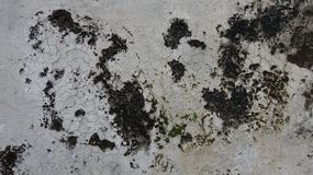 N?rbild av v?ggen som korroderas av svampar royaltyfria foton
