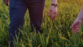 Närbild av vänner som tar sig vid handen Mannen och kvinnan går i långt gräs, rymmer händer Långsam mo Steadicam skott arkivfilmer