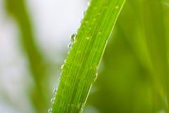 Närbild av växtsidor Royaltyfria Foton