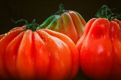 Närbild av våta mogna tomater med en svart bakgrund Arkivbild