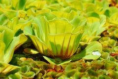 Närbild av vattenweeds. Royaltyfri Bild
