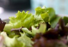 Närbild för blandad sallad för grönsallat Arkivbild