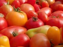 Närbild för många färgrik mogen tomater Royaltyfria Bilder