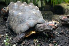 Närbild för 3 sköldpaddor arkivfoton