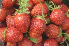 Närbild för trädgårds- jordgubbar Fotografering för Bildbyråer