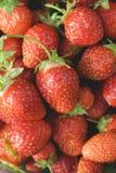 Närbild för trädgårds- jordgubbar Arkivfoton