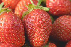 Närbild för trädgårds- jordgubbar Royaltyfri Fotografi