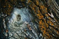 Närbild för trädskäll Arkivbilder