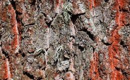 Närbild för trädskäll Fotografering för Bildbyråer