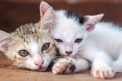 Närbild för två kattungar (II) royaltyfria bilder