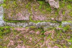 Närbild för vägg för tegelsten för texturtappning mossig Royaltyfria Foton