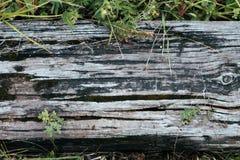 Närbild Gammalt träbräde, mot en bakgrund av grönska, sommarhöstdag i natur Textur för bakgrund av fotografering för bildbyråer