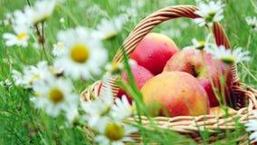 Närbild Härliga röda äpplen i en korg, i mitt av ett blomningtusenskönafält, gräsmatta