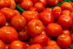 Närbild på ett stort antal tomater arkivfoton