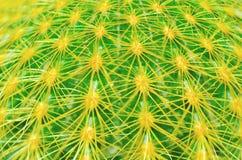 Närbild på kaktusdetaljen Royaltyfri Foto