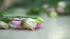 Närbild som skjutas av en blomsterhandlares skrivbord som fylls med blommor, rosor, skönhet stock video