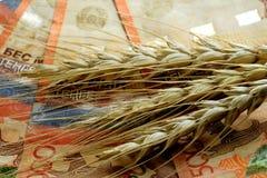 Närbild Vetespikelets ligger på Kasakhstan röda fem tusendelanmärkningar Begreppet av priset av korn och värdet av harven arkivfoton