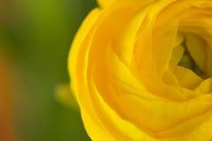 Närbildabstraktion av en gul blomma Arkivfoto