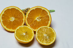 Närbildapelsin och citron som klipps i halva Sked med sädesslag Arkivfoto