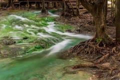 närbilden av aktuell det förgrena sig flodvattnet och rotar royaltyfria bilder