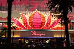 Flamingoneon undertecknar Arkivbild