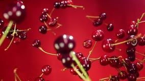Närbilden av körsbäret flyger till och med luften och roterar en röd bakgrund
