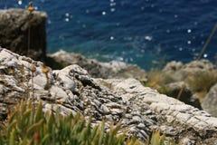 Närbilden av vaggar på bakgrunden av vattnet Lopud, Kroatienpanorama royaltyfri bild