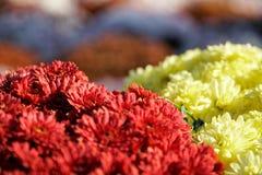 Närbilden blommar att blomma Grupp av vibrerande färgrika blommor som blommar i nedgång arkivfoton
